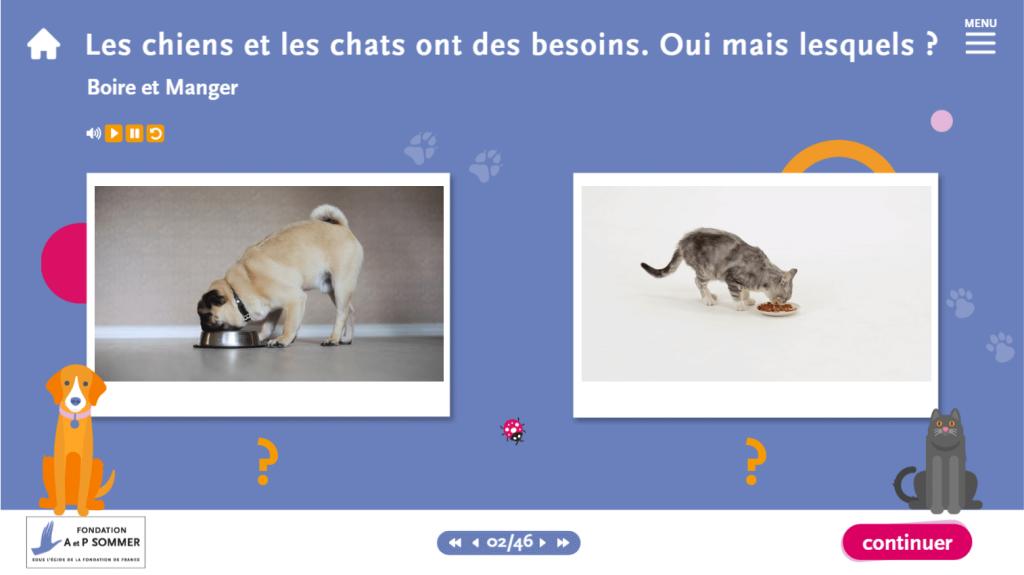 support- les chiens et les chats ont des besoins - La Manane, agence de communication pédagogique