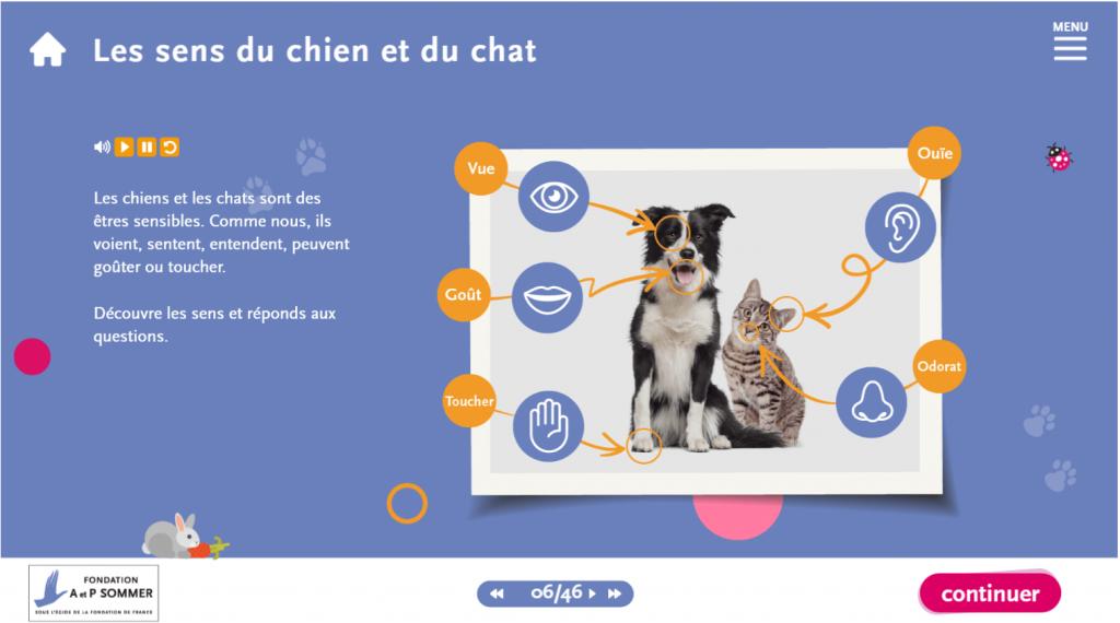 support- les sens des chiens et des chats La Manane, agence de communication pédagogique